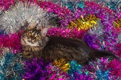 Hübsche Katze auf dem Lametta Stockfotografie