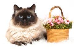 Hübsche Katze mit Korb von Blumen Stockfotos