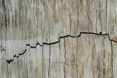 Hübsche kopierte Oberfläche des Fossils Stockbild