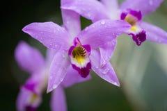 Hübsche Orchidee, mit grünem Hintergrund Stockfotos