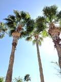 Hübsche Palmen Stockfoto