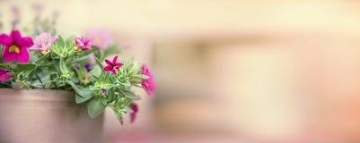 Hübsche Petunie im Blumentopf auf unscharfem Naturhintergrund, Fahne für Website Lizenzfreie Stockfotos