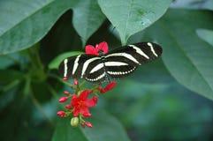 Hübsche Schmetterlinge lizenzfreies stockfoto