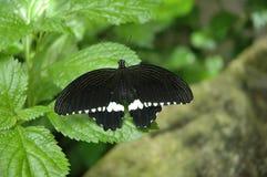 Hübsche Schmetterlinge stockfotos