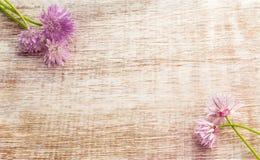 Hübsche Schnittlauchblumen Stockbilder