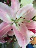 Hübscher Blumengarten Stockbild