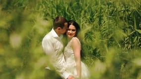Hübscher Bräutigam küsst weich seine attraktive Brunettebraut in der Backe auf dem grünen blühenden Gebiet stock video footage