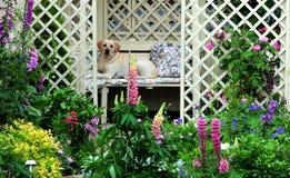 Hübscher Garten stockfotos