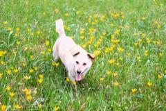 Hübscher Hund Stockfoto