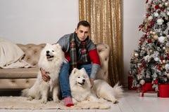 Hübscher junger Mann umarmt samoed Hunde nahe Weihnachtsbaum zu Hause stockfotos
