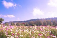 Hübscher manikürter Blumengarten mit buntem auf Gebirgs- und des blauen Himmelshintergrund Lizenzfreies Stockbild