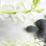 Hübscher Spray des weißen Frühlinges blüht über Wasser lizenzfreie stockfotos
