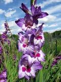 Hübscher Tag im Sommer-Garten Lizenzfreies Stockfoto