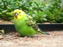 Hübscher Vogel Stockbild