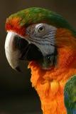 Hübscher Vogel Lizenzfreies Stockbild