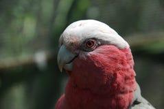 Hübscher Vogel Lizenzfreie Stockfotos