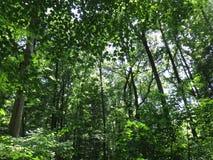 Hübscher Wald an einem Park im Washington DC Lizenzfreie Stockfotos