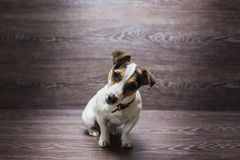 Hübscher Welpe starrt mit Neugier an Lizenzfreies Stockbild