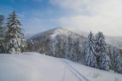 Hübscher Wintermorgen Stockbilder