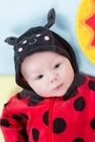 Hübsches Baby, gekleidet im Marienkäferkostüm auf grünem Hintergrund Lizenzfreies Stockbild