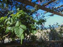 Hübsches Garten-Bild mit Anlagen Stockfoto