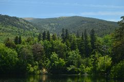Hübsches Grove reflektiert im See in den schönen Gärten des Bauernhofes Art History Biology stockbild