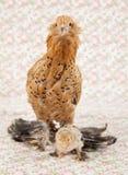 Hübsches Huhn Lizenzfreie Stockfotografie