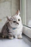Hübsches Kätzchen Stockfotografie