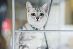 Hübsches Kätzchen Lizenzfreie Stockbilder