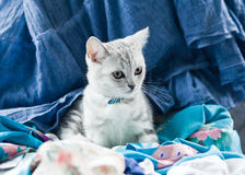 Hübsches Kätzchen Stockbilder