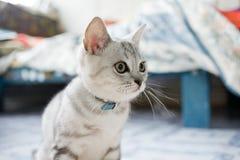 Hübsches Kätzchen Stockfotos