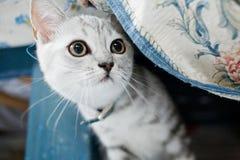 Hübsches Kätzchen Lizenzfreies Stockfoto