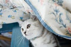 Hübsches Kätzchen Lizenzfreies Stockbild