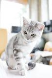 Hübsches Kätzchen Stockfoto