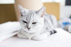 Hübsches Kätzchen Stockbild
