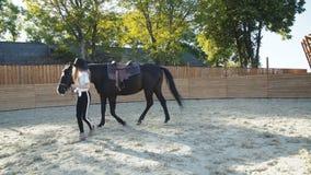 Hübsches Mädchen im Hut führt die schwarze Stute auf der Arena 4K stock video