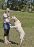 Hübsches Mädchen mit Labrador 3 Lizenzfreie Stockbilder