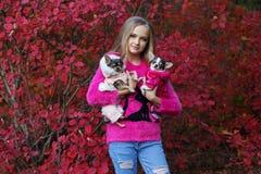 Hübsches Mädchen mit zwei Chihuahuahunden auf der Natur Stockfoto