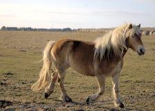 Hübsches Pony Lizenzfreie Stockbilder