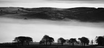 Hügel über den Bäumen Stockfotos
