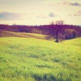 Hügel lizenzfreies stockbild