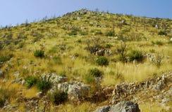 Hügel afer bushfire auf Zakynthos-Insel Lizenzfreie Stockbilder
