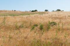 Hügel bedeckt im trockenen Gras Lizenzfreies Stockbild