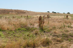 Hügel bedeckt im trockenen Gras Stockbild