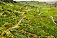 Hügel bedeckt mit Weinbergen in der Weinregion von Elsass, Frankreich lizenzfreies stockbild