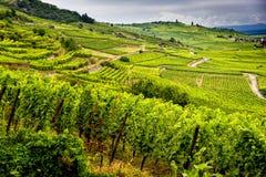 Hügel bedeckt mit Weinbergen in der Weinregion von Elsass, Frankreich lizenzfreie stockbilder