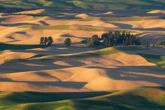 Hügel der Palouse-Region Lizenzfreies Stockfoto