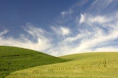Hügel des jungen Weizens Stockfotografie