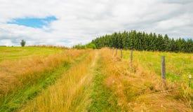 Hügel des Nationalparks Eifel im Sonnenlicht Lizenzfreies Stockbild