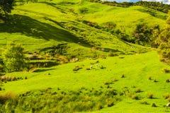 Hügel des Neuseelands Lizenzfreie Stockfotos